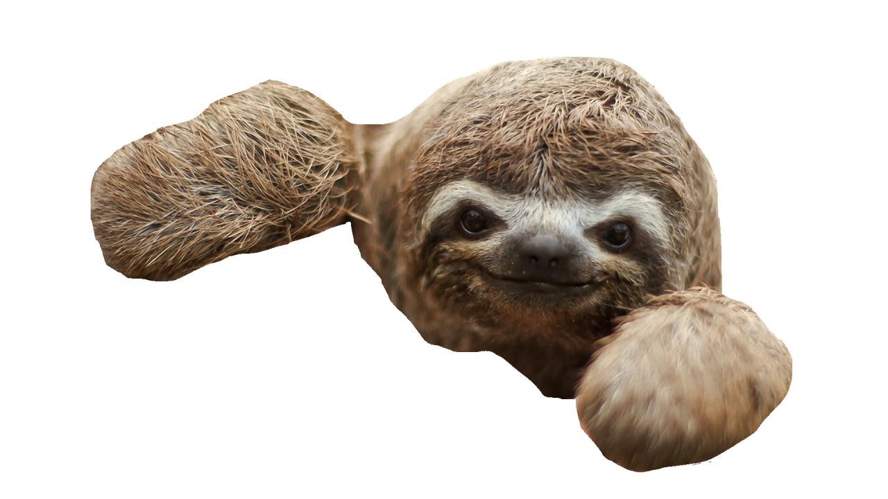 Sloth PNG - 6270