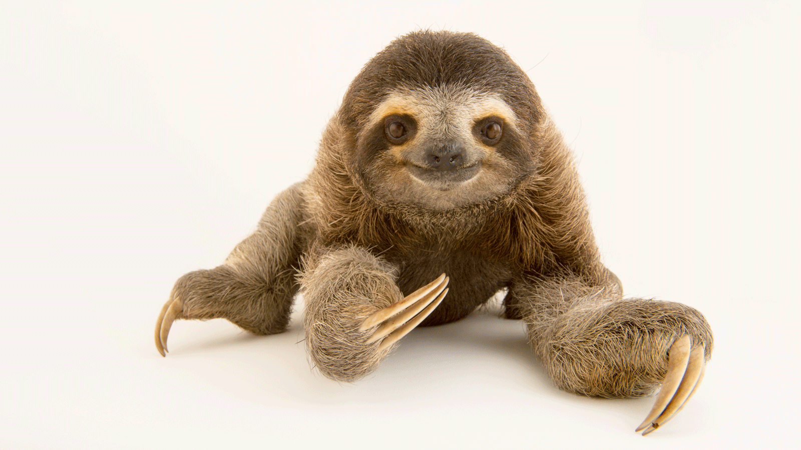Sloth PNG - 6278