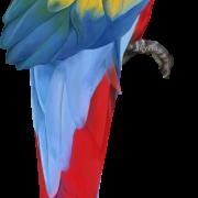 PlusPNG - Rakhi PNG