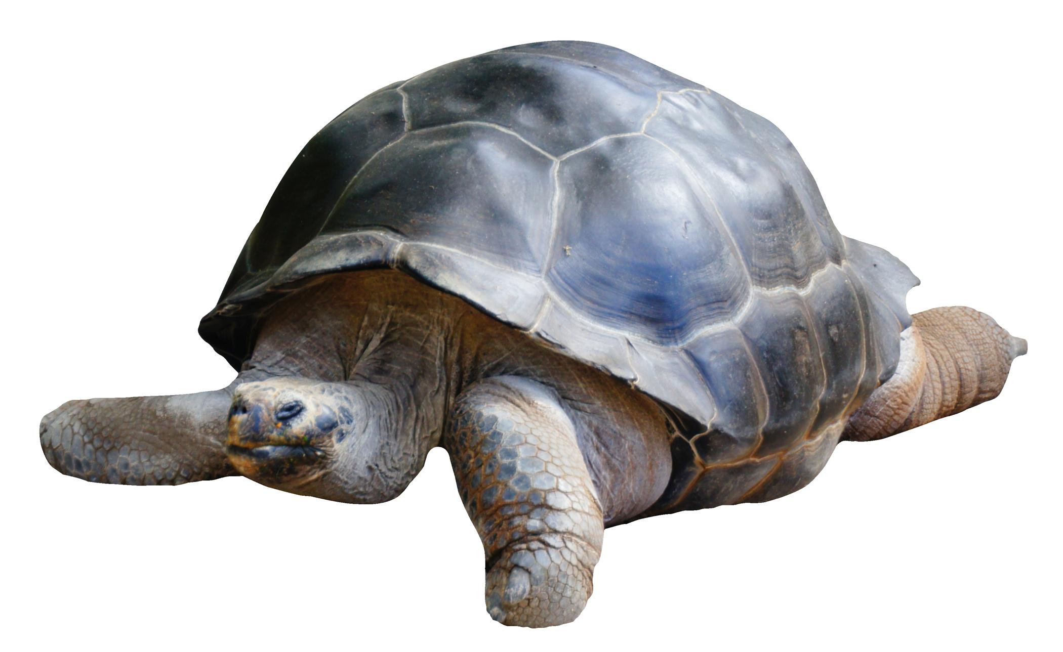 Tortoise PNG - 7209