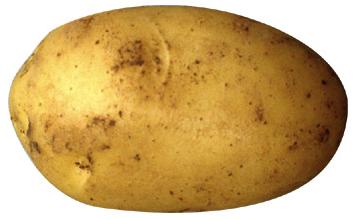 Potato PNG - 7093