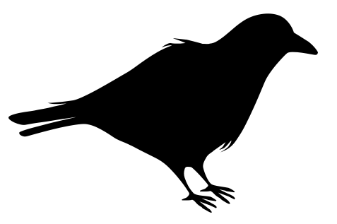 Raven PNG - 4087