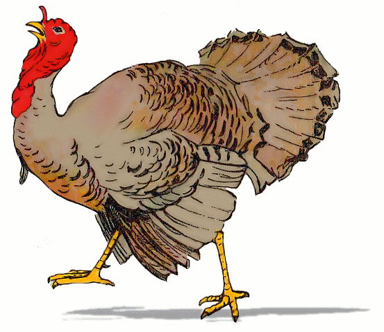 PlusPNG - Turkey Bird PNG
