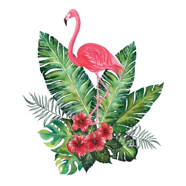 PlusPNG - Flamingo PNG
