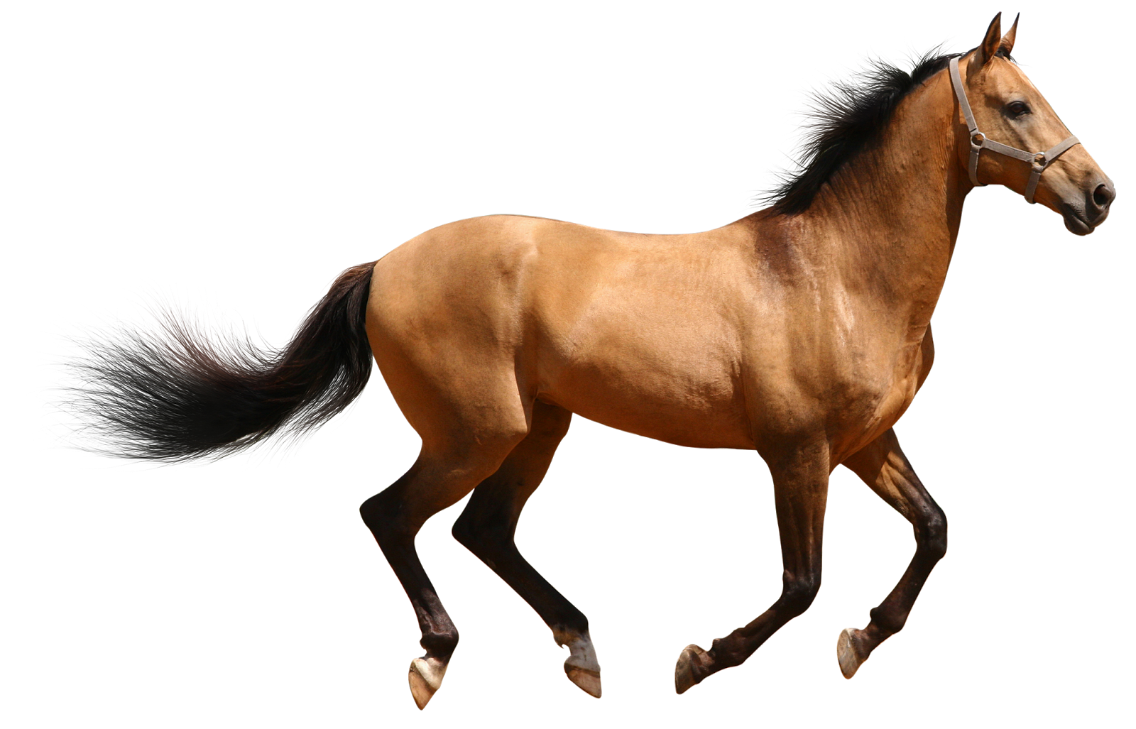 Horse 3d Animal Png image #22321 - Animal PNG - 3d PNG HD