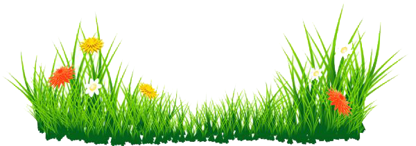 Grass PNG Transparent Images