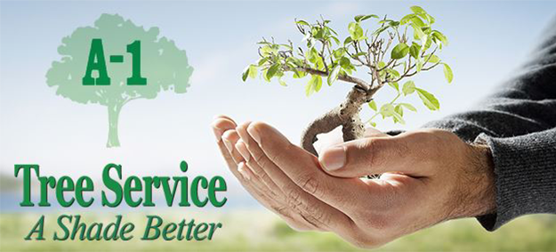 A-1 Tree Service - A 1 Tree Services PNG