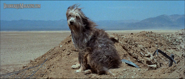 Tim McIntire (voice) in A Boy and His Dog (1975) - A Boy And His Dog PNG