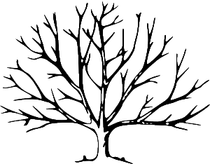 300x234 The Top 5 Regrets of the Dying - A Dying Tree PNG