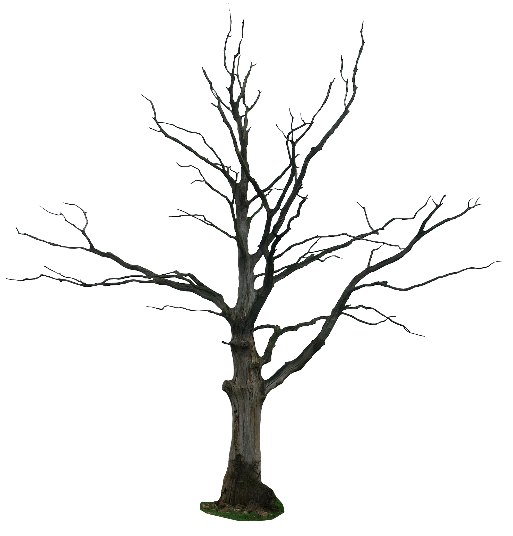 A Dying Tree PNG