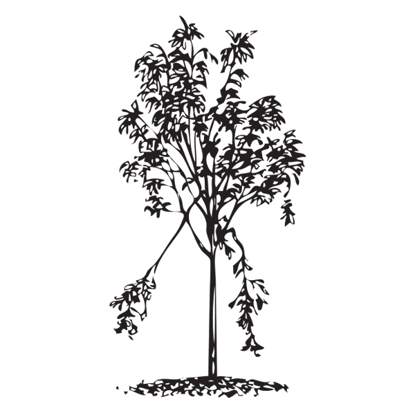 Illustration of a tree with damage - A Dying Tree PNG