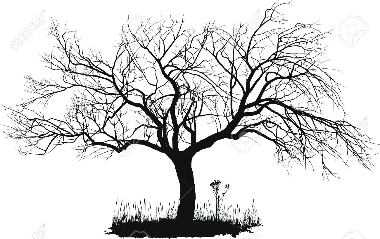 Some trees to use as inspiration: - A Dying Tree PNG