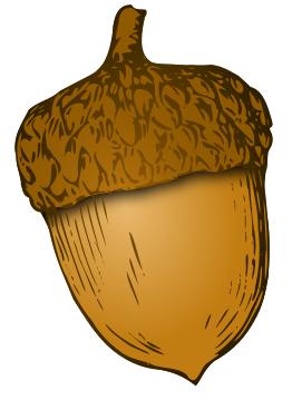 Acorn PNG - 5283