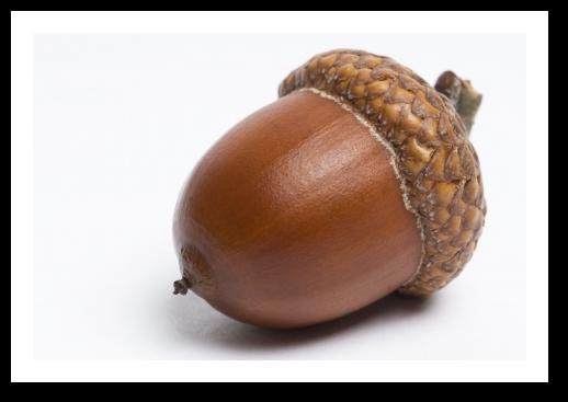 Acorn Png image #37315 - Acorn PNG