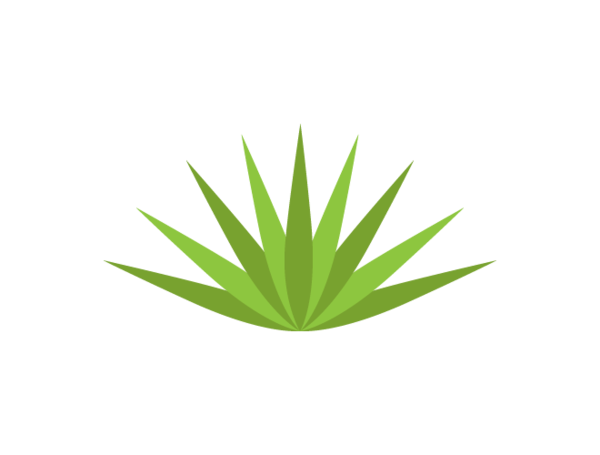 Agave PNG-PlusPNG.com-600 - Agave PNG