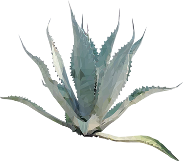 Agave Plant Sticker - Agave PNG