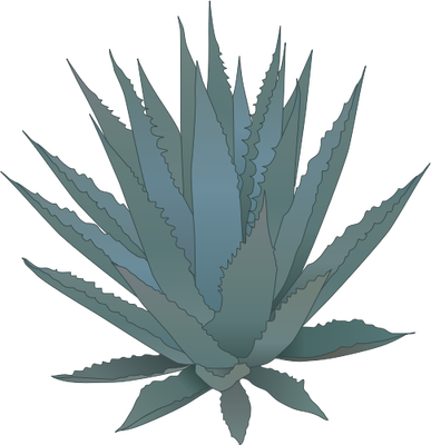 Agave PNG - 160736