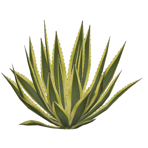 Agave PNG - 160718