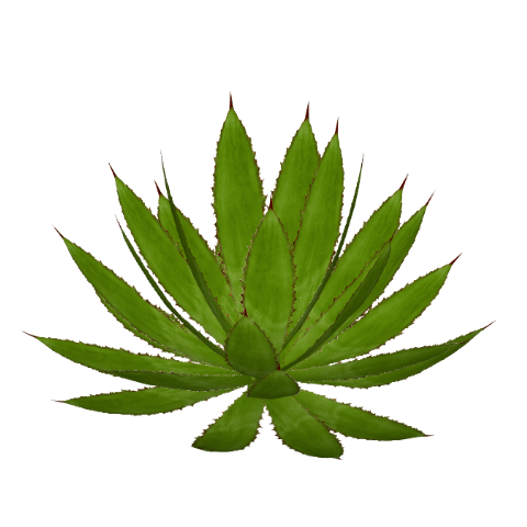Agave PNG - 160734