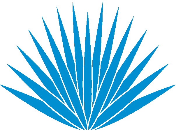 Agave PNG - 160728