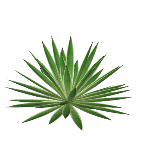 Agave PNG - 160720