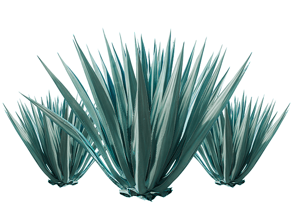 How is it made? - Agave PNG