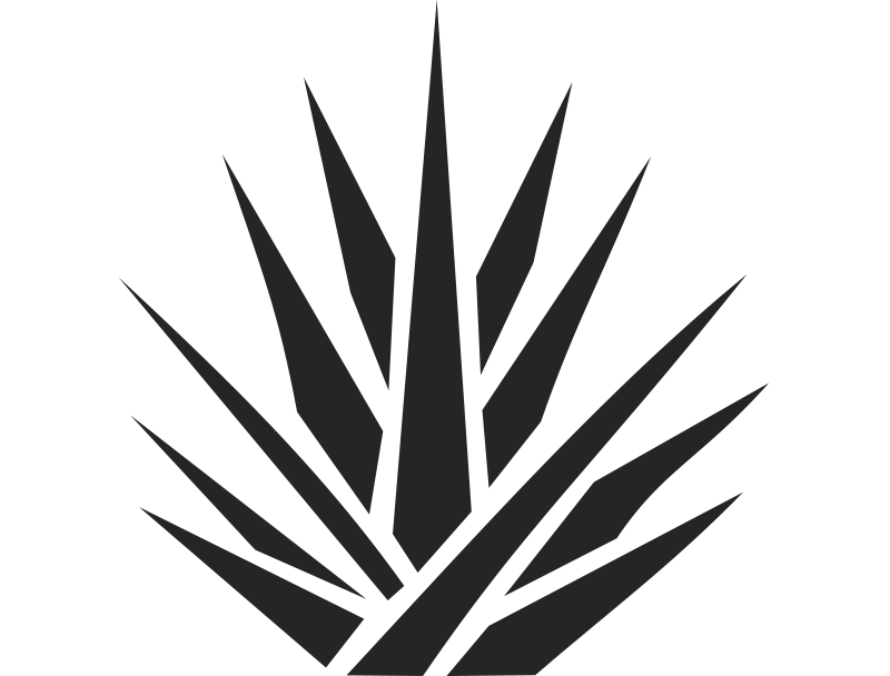 Agave PNG - 160732
