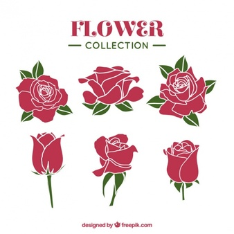 Collection of roses with different styles - Air Rose Vector PNG