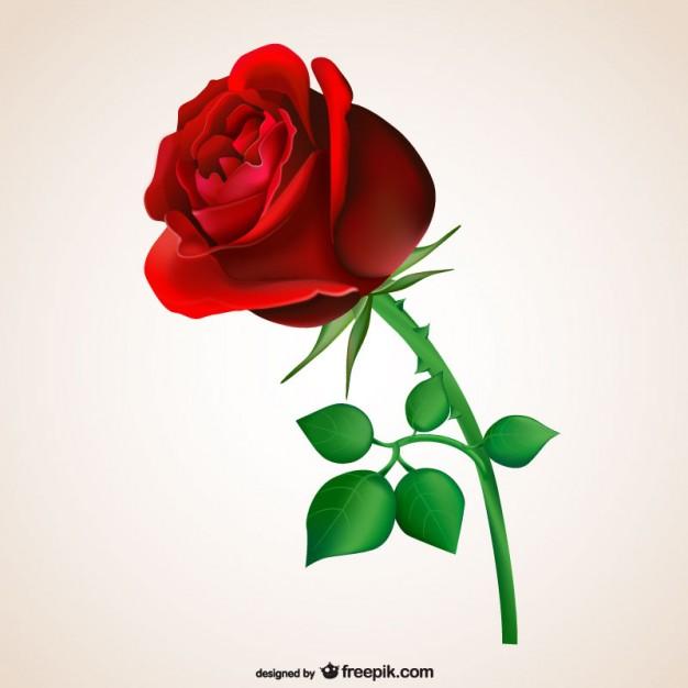 Passionate red rose - Air Rose Vector PNG