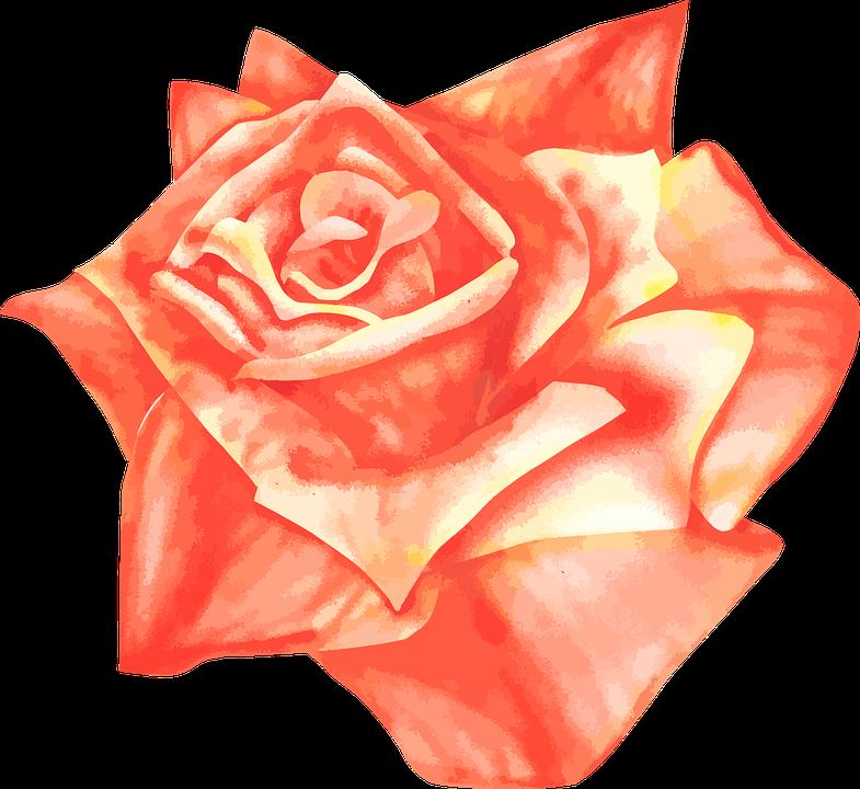 Rose, Airbrush, Vector, Drawing, Orange - Air Rose Vector PNG