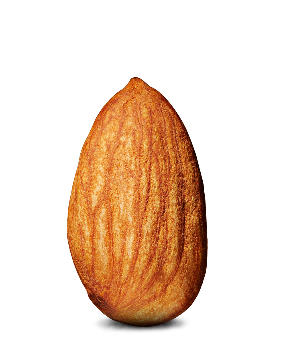 Almond PNG - 13122