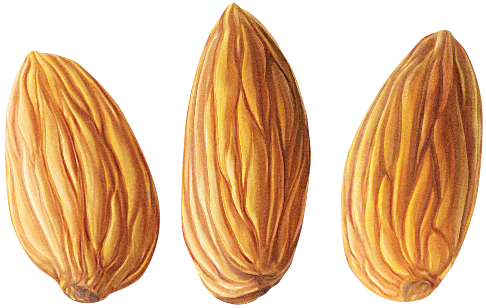 Almond PNG - 13126