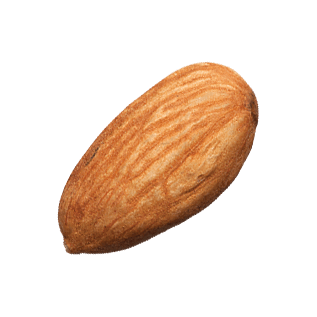 Almond PNG - 13119