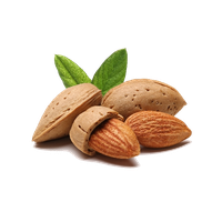 Almond PNG - 13121