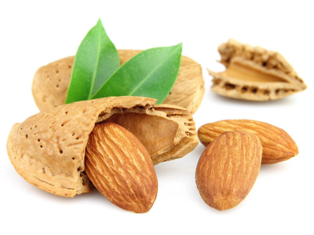 Almond PNG - 13125