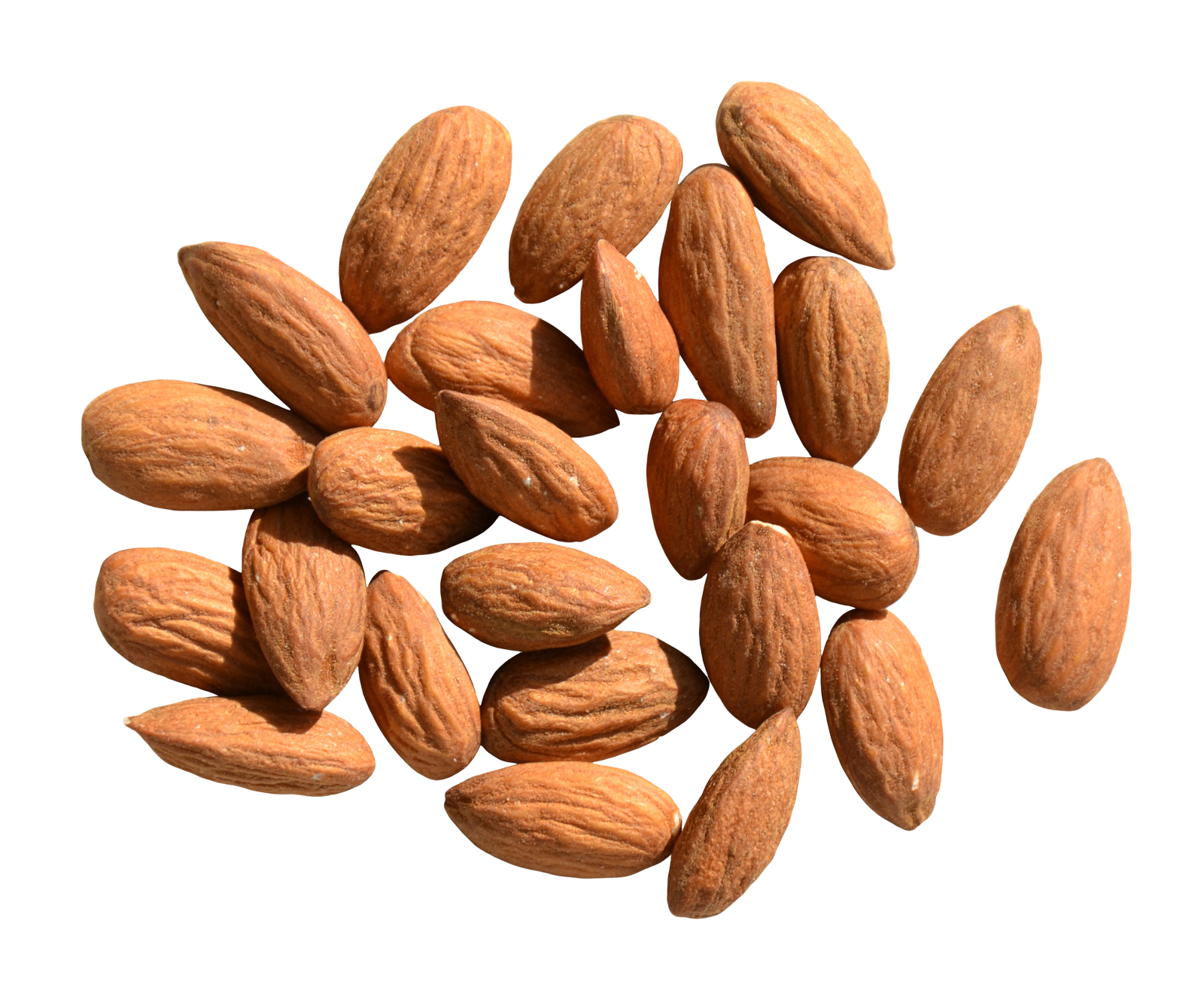 Almond PNG - 13120