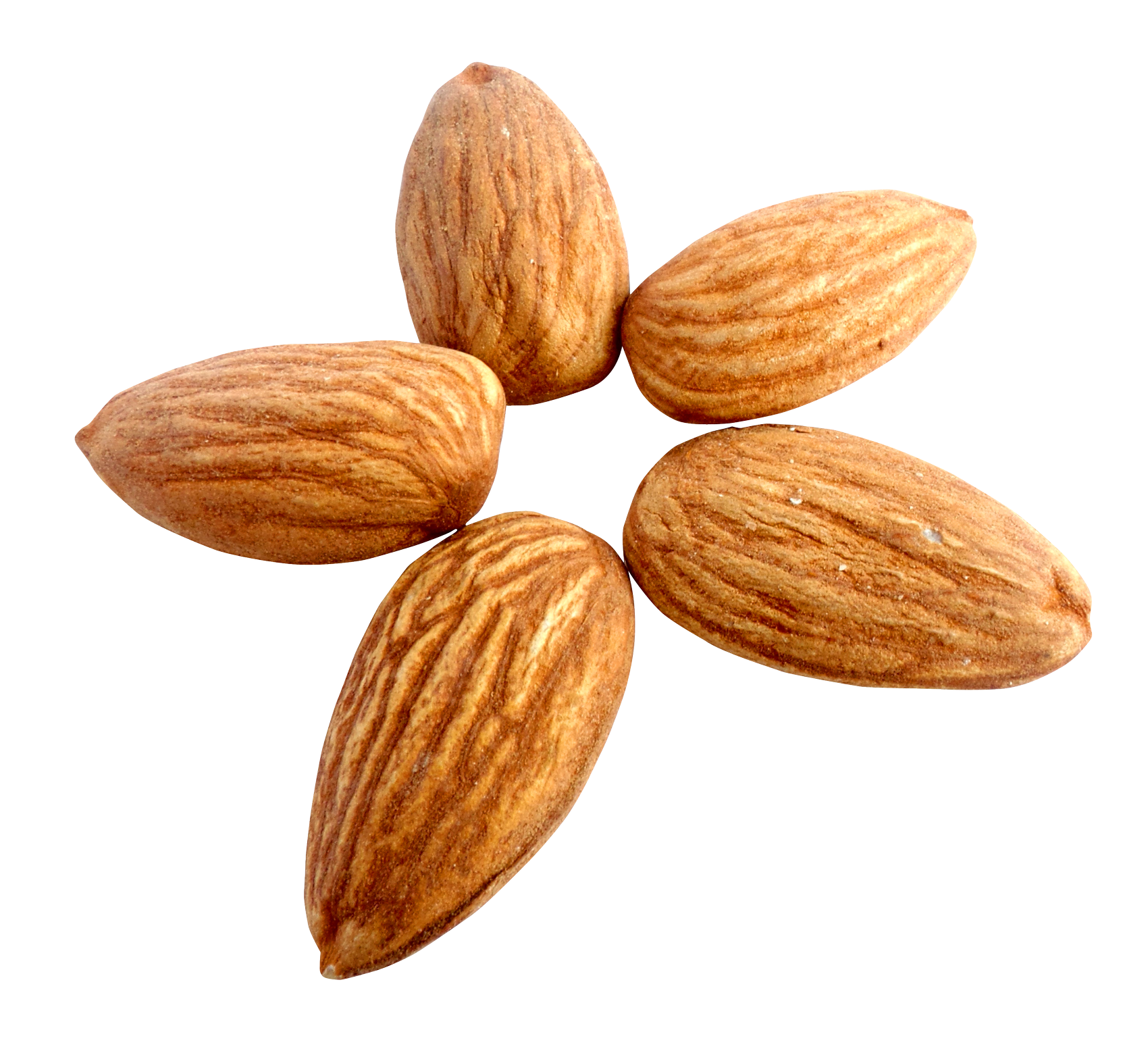 Almond PNG - 13123