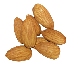 Almond PNG Transparent Image - Almond PNG