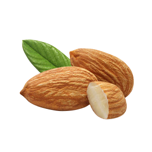 Almond PNG - 13127