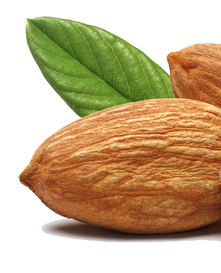 Almond PNG - 13134