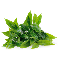 Along with general health benefits, the green tea in our Zupafood™ delivers  a natural energy boost. That is because one of the actives in green tea is  PlusPng.com  - Green Tea PNG