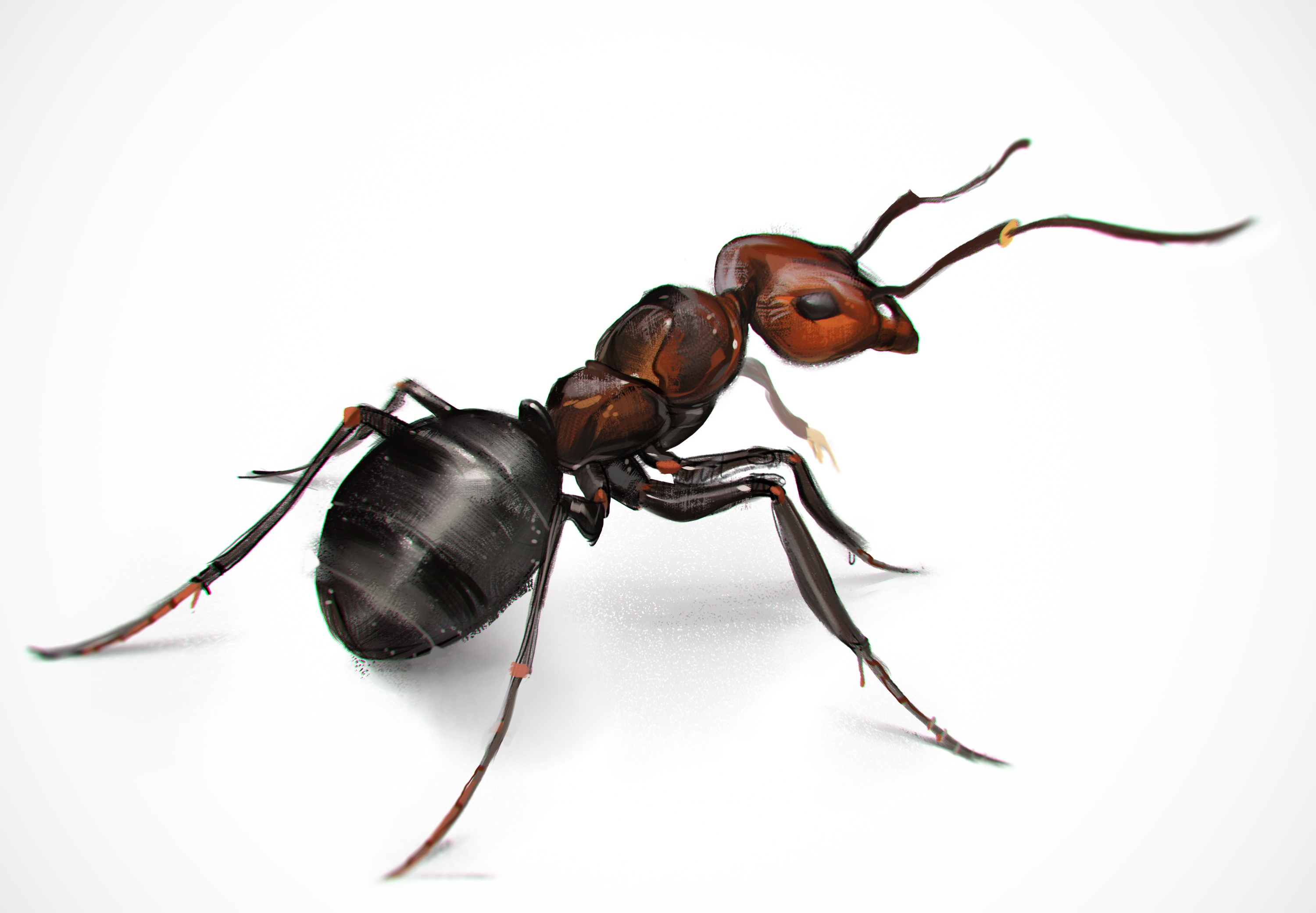 An ant study! Woop! - Ant PNG