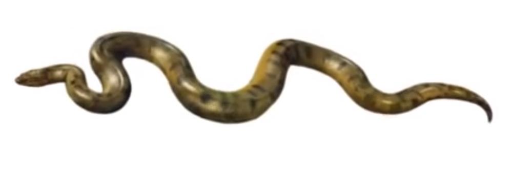 Anaconda PNG - 27323