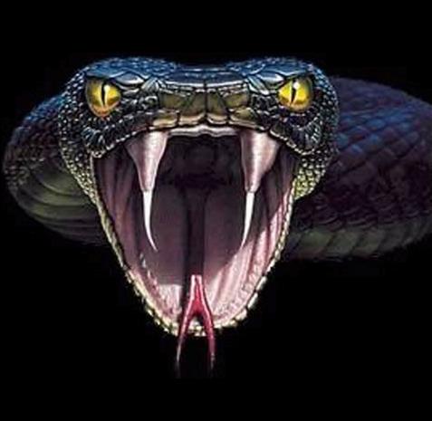 Anaconda PNG - 27332