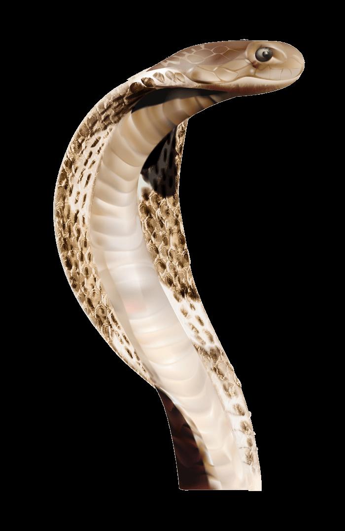Anaconda PNG - 10952