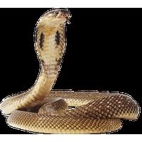 Anaconda PNG - 27322