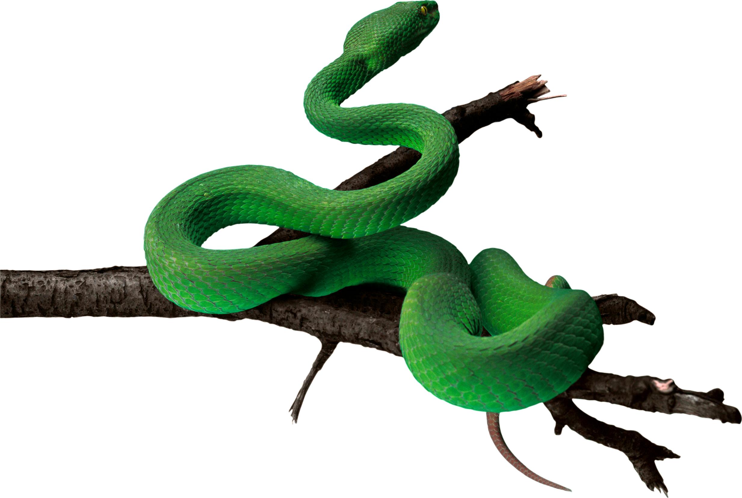 Anaconda PNG - 27325