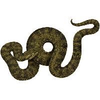 Anaconda PNG - 27320