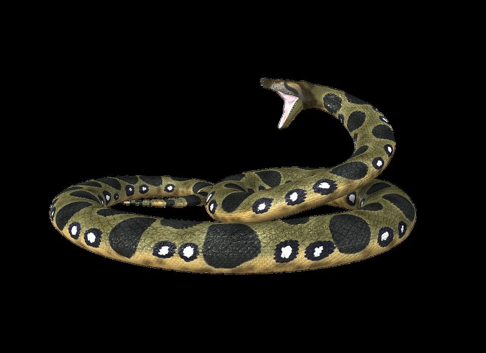 Anaconda PNG - 10956