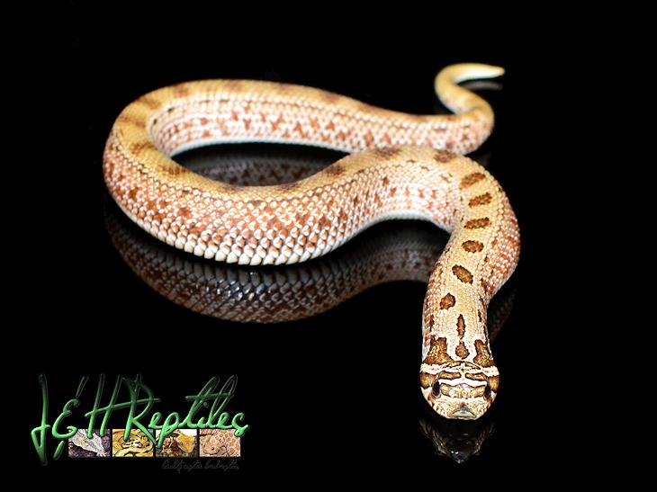 Anaconda PNG - 10960